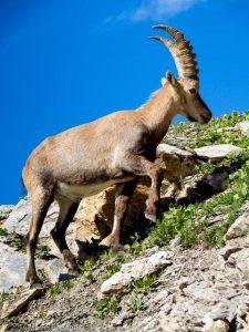 Col de Salenton · Alpes, Aiguilles Rouges, Vallon de Bérard, FR · GPS 46°0'27.35'' N 6°51'17.59'' E · Altitude 2495m