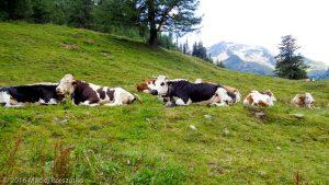 Col de la Forclaz · Alpes, Valais, Massif du Mont-Blanc, CH · GPS 46°3'27.84'' N 7°0'4.70'' E · Altitude 1541m