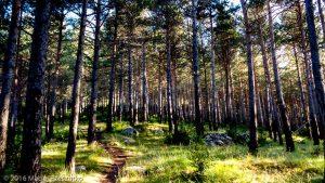 Parc Natural del Cadí · Pyrénées, Catalogne, Cadí, ES · GPS 42°16'36.55'' N 1°53'16.83'' E · Altitude 1505m
