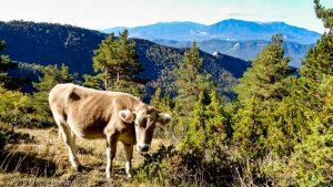 Parc Natural del Cadí · Pyrénées, Catalogne, Cadí, ES · GPS 42°17'27.23'' N 1°53'10.10'' E · Altitude 1764m