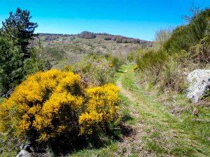 Parc National des Cévennes · Cévennes, Gard, FR · GPS 44°5'0.97'' N 3°28'22.42'' E · Altitude 1183m
