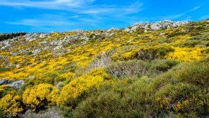 Parc National des Cévennes · Cévennes, Gard, FR · GPS 44°0'29.90'' N 3°30'26.59'' E · Altitude 1098m