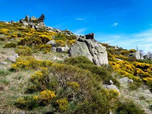 Parc National des Cévennes · Cévennes, Gard, FR · GPS 44°0'29.95'' N 3°30'27.20'' E · Altitude 1104m