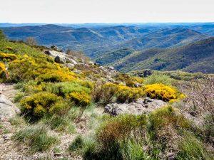 Parc National des Cévennes · Cévennes, Gard, FR · GPS 44°0'30.08'' N 3°30'27.52'' E · Altitude 1107m