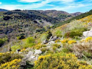 Parc National des Cévennes · Cévennes, Gard, FR · GPS 44°0'30.31'' N 3°30'27.57'' E · Altitude 1108m