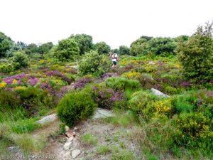 Arête des Bassels · Hérault, Parc Naturel du Haut-Languedoc, Massif du Caroux, FR · GPS 43°35'54.61'' N 3°1'5.20'' E · Altitude 776m