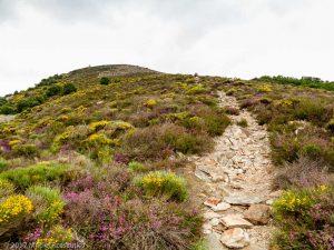 Serre de More · Hérault, Parc Naturel du Haut-Languedoc, Massif du Caroux, FR · GPS 43°38'58.78'' N 3°1'21.22'' E · Altitude 560m