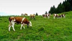 Les Carroz d'Arâches · Alpes, Préalpes de Savoie, Massif du Giffre, FR · GPS 46°2'12.04'' N 6°39'13.52'' E · Altitude 1180.7m