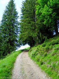 Les Tronchets · Alpes, Préalpes de Savoie, Massif du Giffre, FR · GPS 46°2'14.17'' N 6°39'35.67'' E · Altitude 1470m