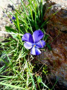 Refuge de Bel Lachat · Alpes, Aiguilles Rouges, FR · GPS 45°55'18.72'' N 6°49'40.96'' E · Altitude 2090m