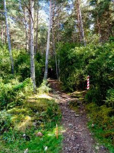 Serrat de la Cogulera · Pyrénées, Catalogne, Cadí, ES · GPS 42°20'13.82'' N 1°47'15.38'' E · Altitude 1300m