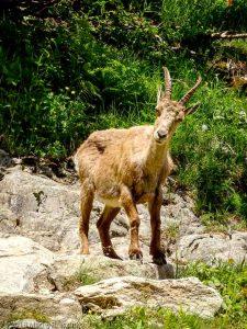 Dans la montée à la Tête aux Vents · Alpes, Préalpes de Savoie, Aiguilles Rouges, FR · GPS 46°0'6.77'' N 6°55'6.49'' E · Altitude 1642m