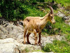 Dans la montée à la Tête aux Vents · Alpes, Préalpes de Savoie, Aiguilles Rouges, FR · GPS 46°0'6.55'' N 6°55'6.25'' E · Altitude 1646m