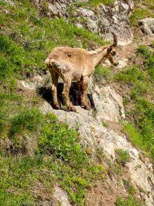 Dans la montée à la Tête aux Vents · Alpes, Préalpes de Savoie, Aiguilles Rouges, FR · GPS 46°0'6.47'' N 6°55'6.13'' E · Altitude 1647m