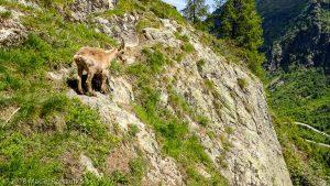 Dans la montée à la Tête aux Vents · Alpes, Préalpes de Savoie, Aiguilles Rouges, FR · GPS 46°0'6.61'' N 6°55'6.02'' E · Altitude 1648m