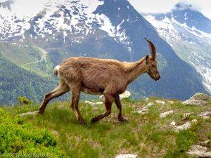Descente à la Flégère · Alpes, Préalpes de Savoie, Aiguilles Rouges, FR · GPS 45°58'23.68'' N 6°53'52.23'' E · Altitude 1945m
