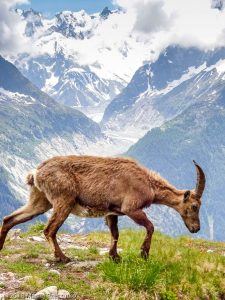 Descente à la Flégère · Alpes, Préalpes de Savoie, Aiguilles Rouges, FR · GPS 45°58'23.34'' N 6°53'52.19'' E · Altitude 1946m