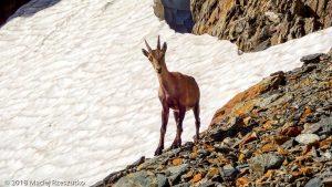 Itinéraire N°14 dans le Val Veny · Alpes, Massif du Mont-Blanc, Val Veny, IT · GPS 45°46'58.43'' N 6°50'46.86'' E · Altitude 2665m