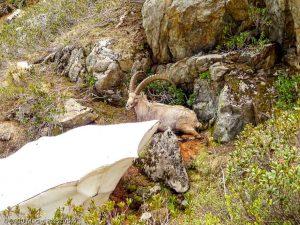 WE Choc Soutenu J1 · Alpes, Aiguilles Rouges, Vallée de Chamonix, FR · GPS 45°59'53.47'' N 6°54'51.80'' E · Altitude 1916m