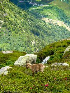Session privée du trail-running · Alpes, Aiguilles Rouges, Vallée de Chamonix, FR · GPS 45°59'47.85'' N 6°54'47.59'' E · Altitude 1994m