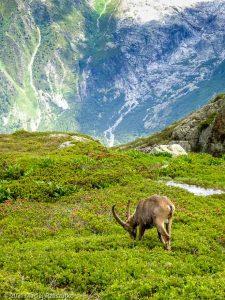 Session privée du trail-running · Alpes, Aiguilles Rouges, Vallée de Chamonix, FR · GPS 45°59'47.86'' N 6°54'47.57'' E · Altitude 1994m