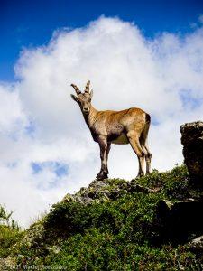 Stage Trail Initiation · Alpes, Aiguilles Rouges, Vallée de Chamonix, FR · GPS 45°59'38.95'' N 6°54'41.99'' E · Altitude 1984m